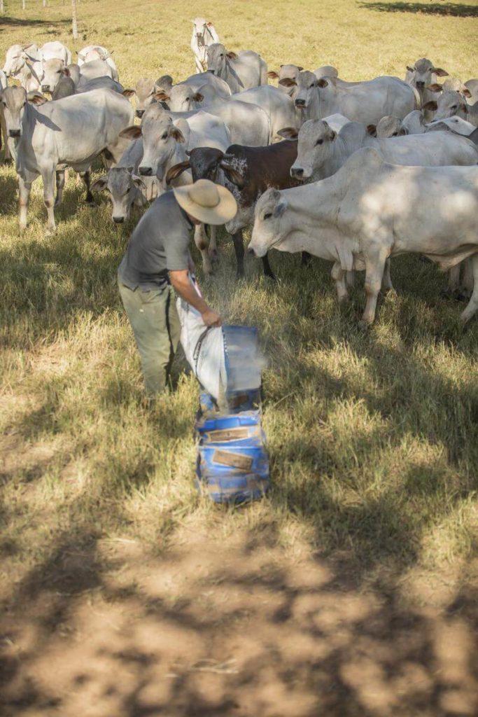 Suplementação a pasto. Foto: Rally da Pecuária.