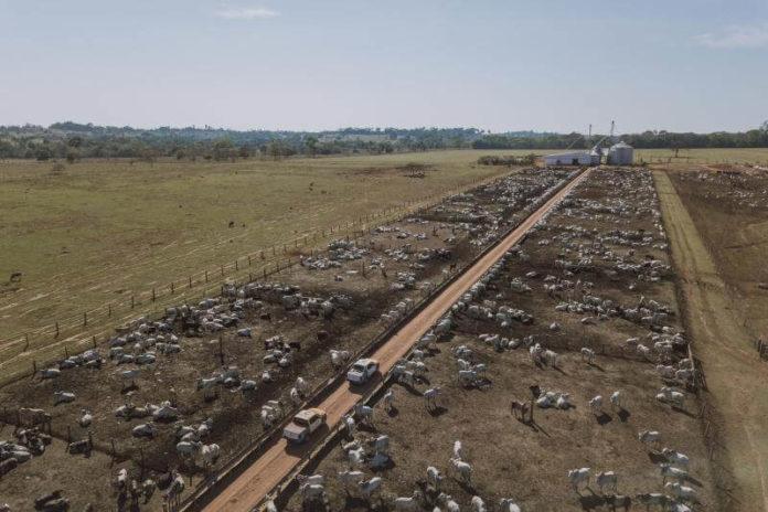 Foto: Rally da Pecuária.