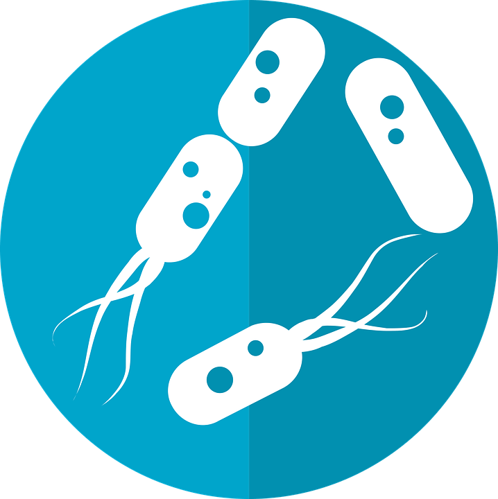 Figura 1 - Bactérias representando bioinoculantes.