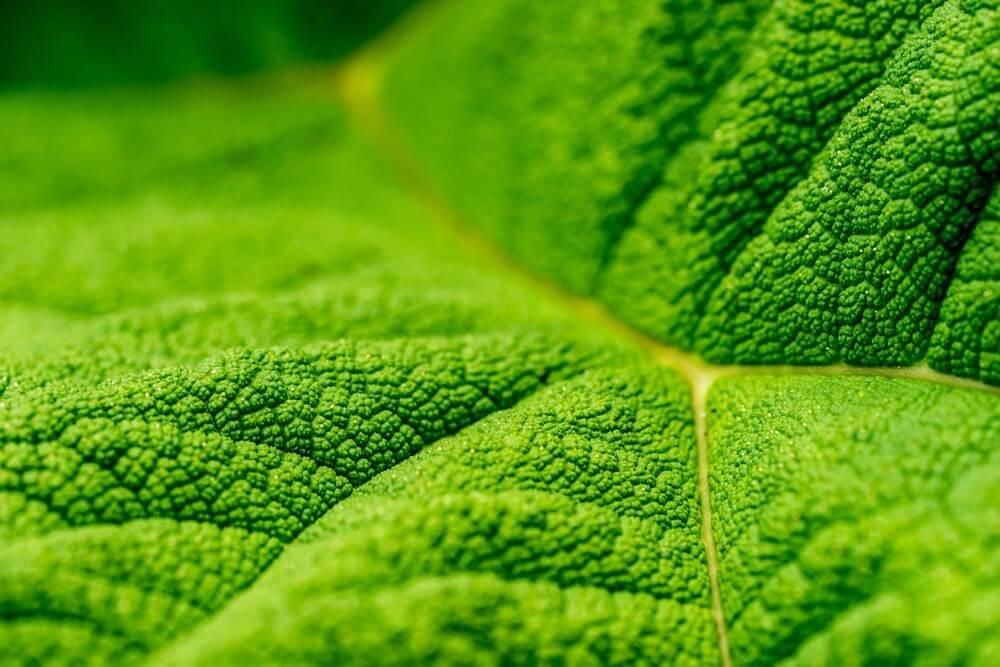 Nanocompostos que são capazes de melhorar a fotossíntese.
