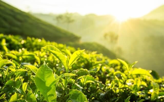 Representação de uma agricultura mais sustentável.