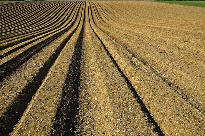 Terra sendo preparada para o plantio.