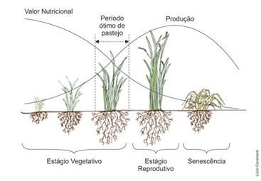Figura 2 - Relação entre a maturação e o teor nutricional da forragem. Fonte: MilkPoint.