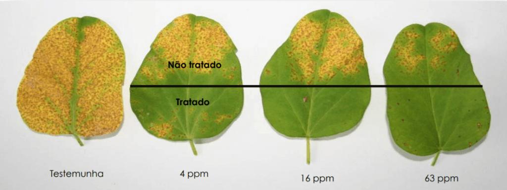 Figura 4. Exemplo de fungicida móvel em diferentes concentrações. Fonte: José Otávio Menten.