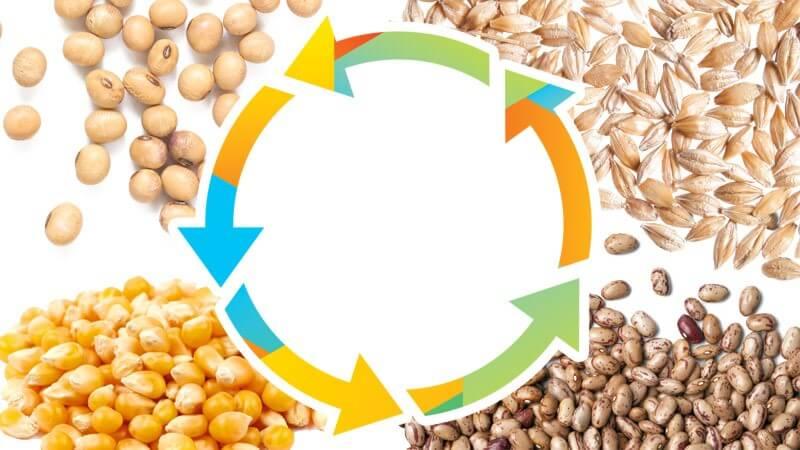 Figura 6. Esquema representativo da rotação de culturas com sementes de milho, feijão, aveia e soja. Fonte: Boas práticas agronômicas.