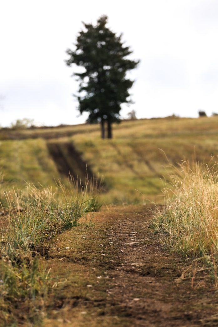 Um caminho no Pasto.