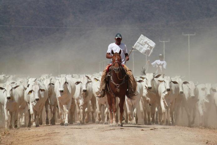 Photo: Agropecuária Jacarezinho.