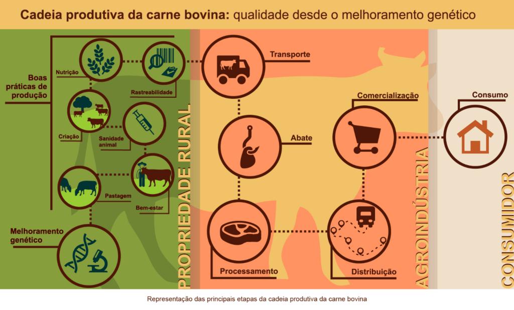 Figura 2. Representação das principais etapas da cadeira produtiva de carne bovina: do campo ao consumidor. Fonte: EMBRAPA.