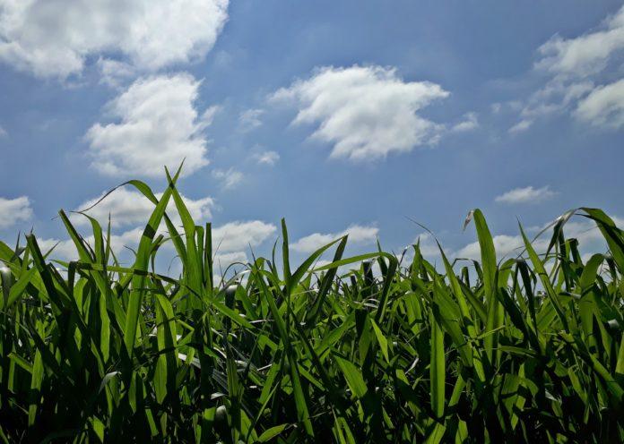 Pasto e o céu azul