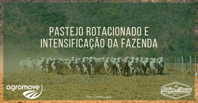 Pastejo rotacionado e intensificação da fazenda