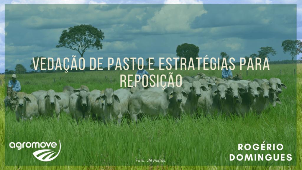 Estratégias para reposição de animais na Pecuária de Corte