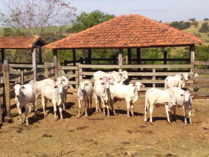 Fazenda Santa Maria, Itápolis, SP.