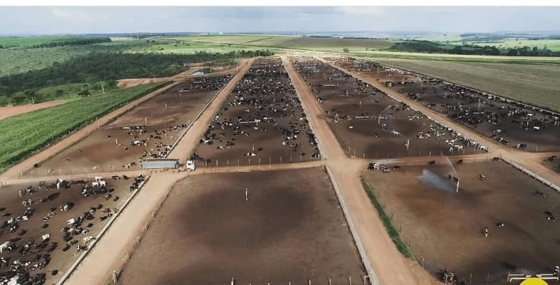 Visão geral do confinamento de gado. Engorda ou Terminação. Fonte: Rogério Domingues.