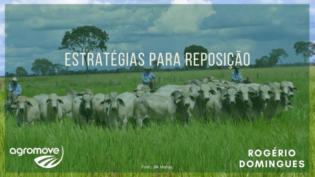 Webinar Estratégias para reposição de animais na Pecuária de Corte