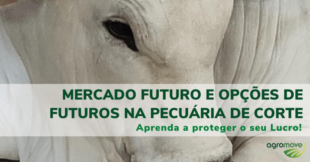 Curso Mercado Futuro e Opções de Futuros na Pecuária de Corte