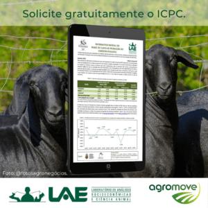 IPAD com o Informativo de custo de produção do cordeiro paulista e bois ao fundo.