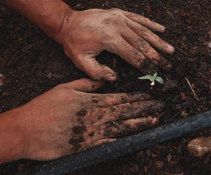 Mãos+ na terra e plantinha germinando.