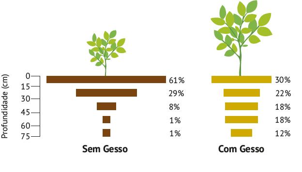 Figura 3. Ilustração da distribuição dos sistemas radiculares de plantas com e sem aplicação do gesso agrícola. Fonte: Adaptado de Souza et al., 2005.
