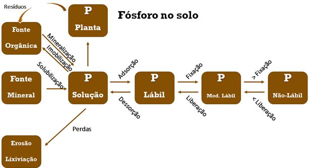 Figura 1: Ciclo do fósforo no solo. Fonte: Adaptado de Pinto, 2012.