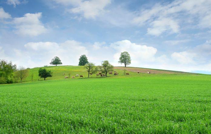 Pastagem com gado. Foto: Blog Belgo.
