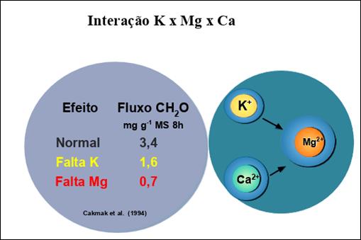 Figura 5. Interação K x Mg x Ca e fluxo de compostos orgânicos. Fonte: Cakmak et al., (1994) apud Vitti & Sgarbiero (2020).