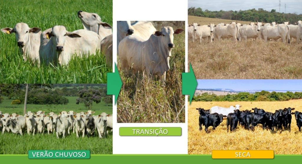 Fig. 1. Fluxograma de transição do verão chuvoso para a seca. Fonte: Fazenda JL e Agropecuária Stocco.