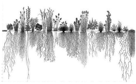 Figura 2. Demonstração de um sistema com grande diversidade de vegetação e favorável a microbiota do solo. Fonte: Cardoso & Andreote, 2016.