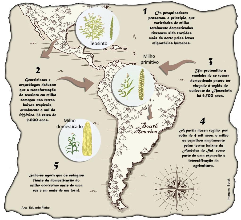 Fig. 4. Distribuição da evolução do milho nas Américas. Fonte: EMBRAPA.