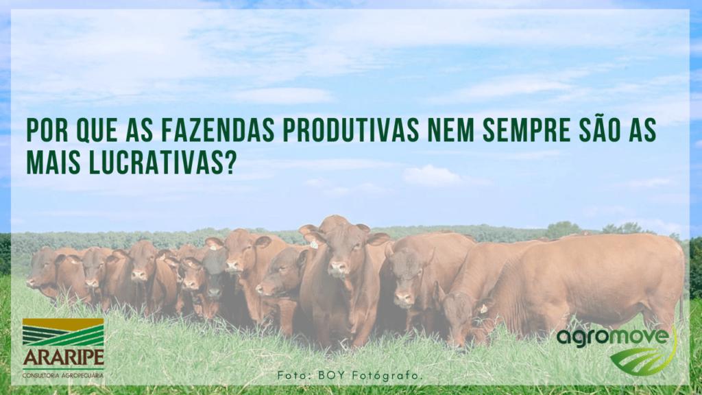 Por que as fazendas produtivas nem sempre são as mais lucrativas?