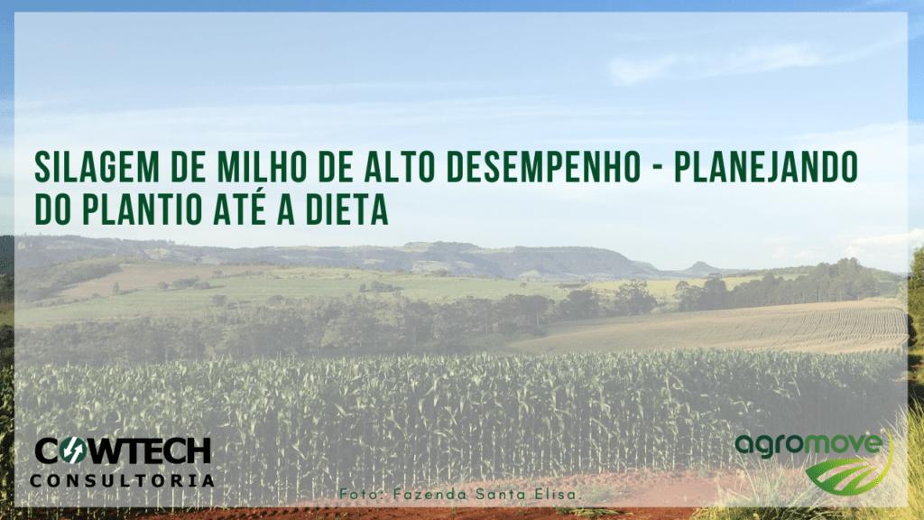 Silagem de milho de alto desempenho - planejando do plantio até a dieta
