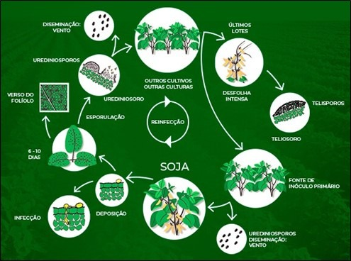 Figura 1. Ciclo da ferrugem asiática da soja. Disponível em: https://blog.aegro.com.br/ciclo-da-ferrugem-da-soja/